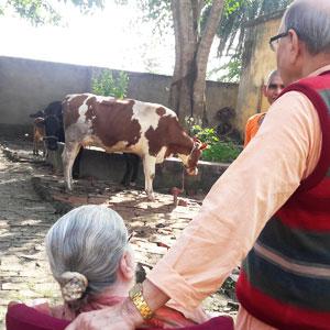 sree archana maa at the goshala